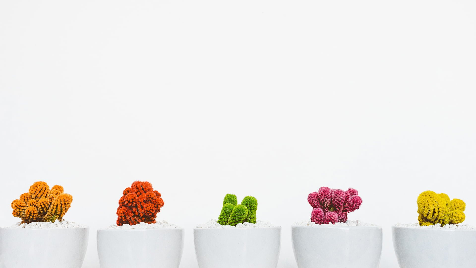 екипен коучинг високо ефективните екипи кактуси шарени бял фон group coaching highly effective teams cactus colourful white background Generative Mindset ILC